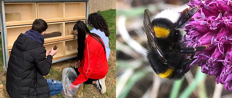 Alexander Coppel Gesamtschule - Unser Insektenhaus